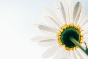 flower600_400